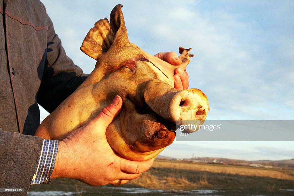 A competitor holds a freshly cut pig head during the Pigs Carvers Festival in the Transcarpathian village of Gecha, some 800 km from the capital Kiev on January 26, 2013. Some 26 teams of butchers from Ukraine, Hungary and Serbia, the countries who cultivate pig-breeding, took part in this traditional competition. Each team has to kill a pig, butcher the carcass and prepare a variety of dishes made from the pork.