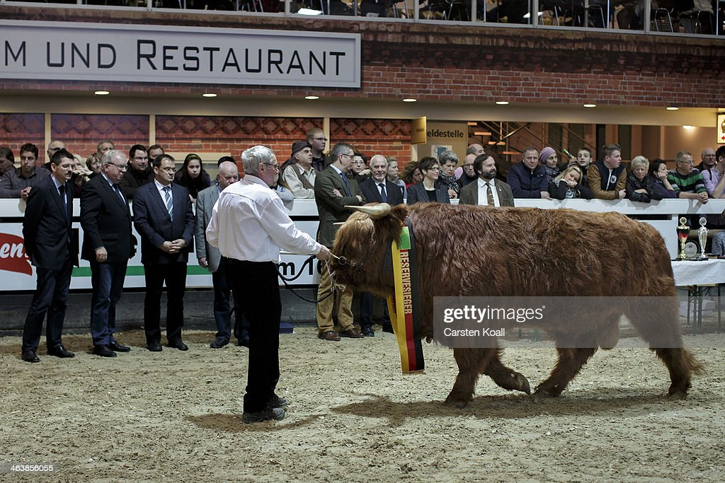 A competitor presents his cattle before the award ceremony in the farm animals hall of the Gruene Woche International Agriculture Fair on January 19, 2014 in Berlin, Germany. The Gruene Woche is the world's largest agricultural trade fair and is open to the public until January 26.