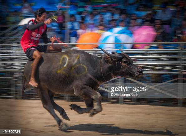 Competitors and others gather during water buffalo races that mark the end of Buddhist Lent The annual one day event features races in three...
