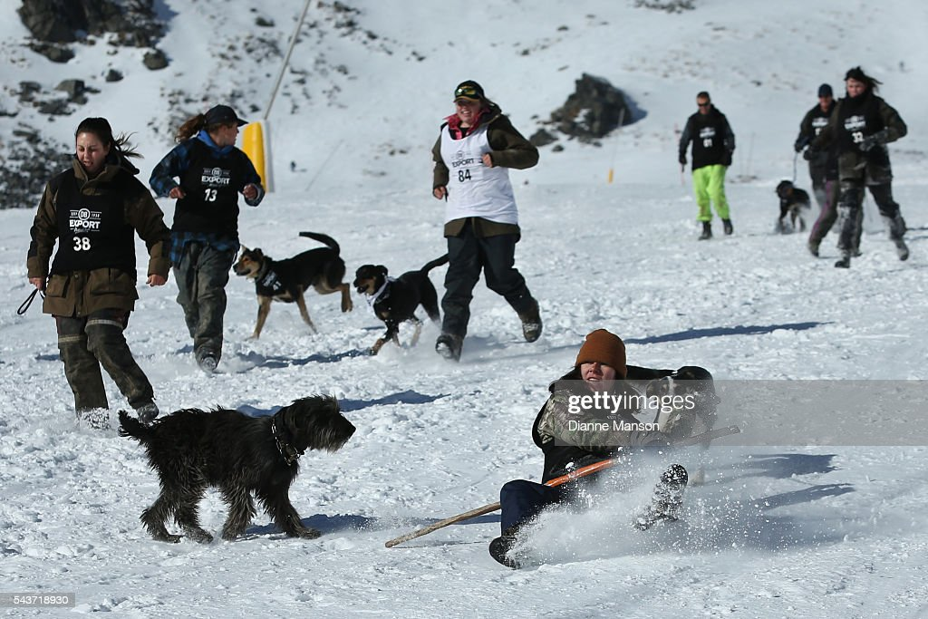 Competitors and their dogs race in the snow during the DB Export Dog Derby at the Remarkables ski field on June 30, 2016 in Queenstown, New Zealand.