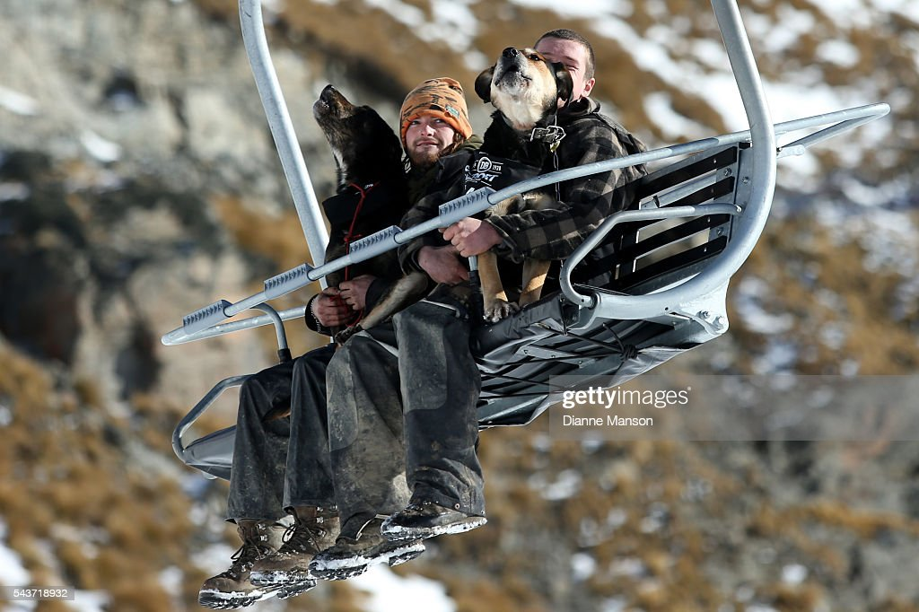 Competitors and their dogs ride the chair lift to the start line during the DB Export Dog Derby at the Remarkables ski field on June 30, 2016 in Queenstown, New Zealand.