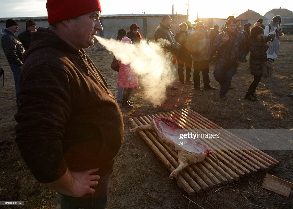 Competitors gather around a pig carcase during the Pigs Carvers Festival in the Transcarpathian village of Gecha, some 800 km from the capital Kiev on January 26, 2013. Some 26 teams of butchers from Ukraine, Hungary and Serbia, the countries who cultivate pig-breeding, took part in this traditional competition. Each team has to kill a pig, butcher the carcass and prepare a variety of dishes made from the pork.
