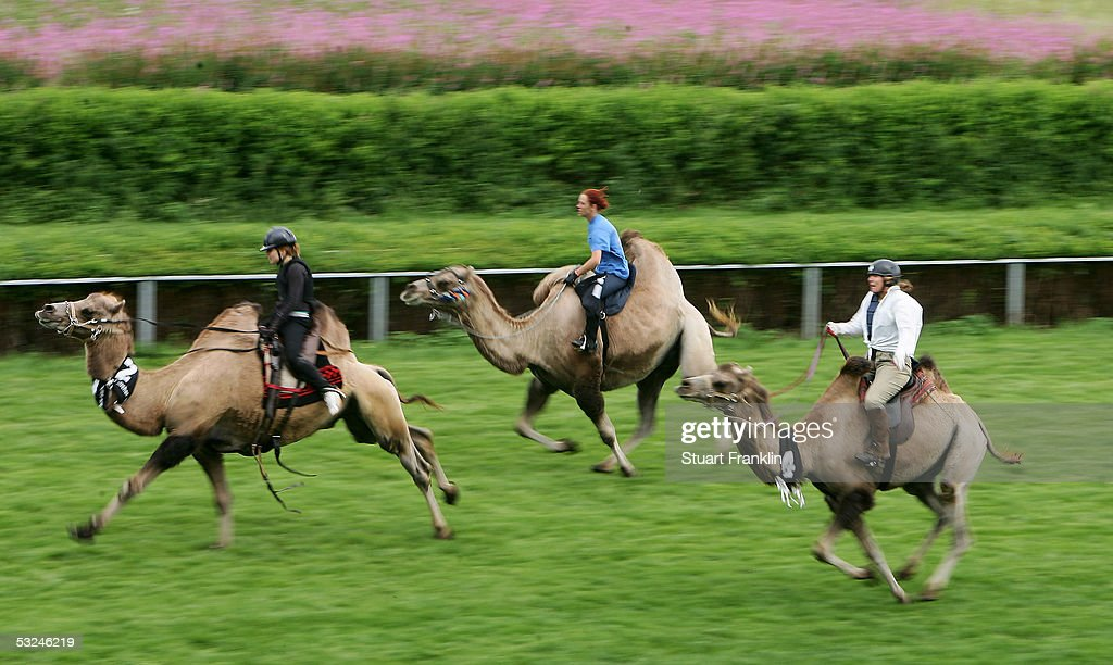 Competitors race in the final of the Trampeltiere race at The 1001 and 1 Camel Night Camel Races at Hamburg Horn Race Course on July 16, 2005, in Hamburg, Germany.