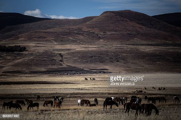 Competitors race through the fields on July 16 2016 in Semonkong Horseracing in the mountain kingdom of Lesotho is not like at Ascot or Longchamp but...