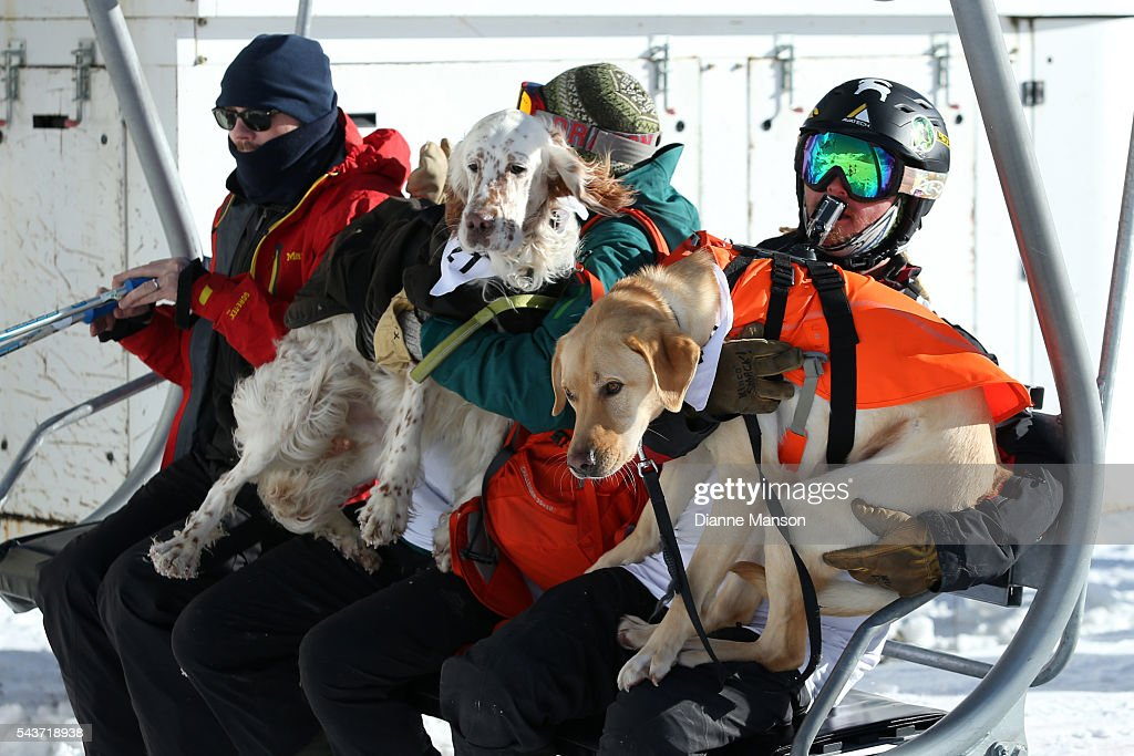Competitors ride in the chair lift to the start line during the DB Export Dog Derby at the Remarkables ski field on June 30, 2016 in Queenstown, New Zealand.