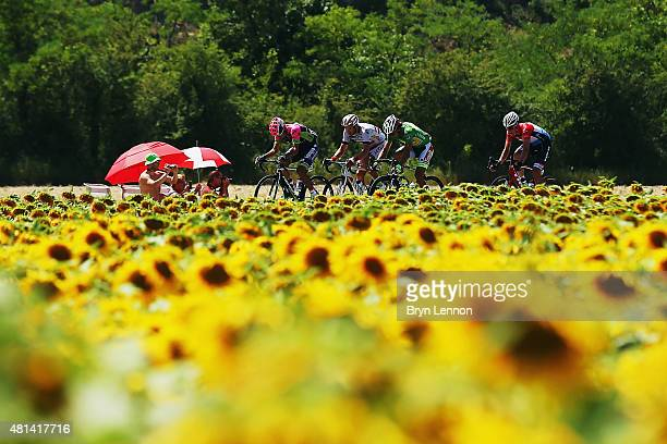 Competitors ride thru a sunflower field during the sixteenth stage of the 2015 Tour de France a 201km stage between Bourg de Peage and Gap on July 20...