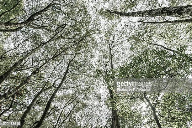 Complex pattern in birch branches