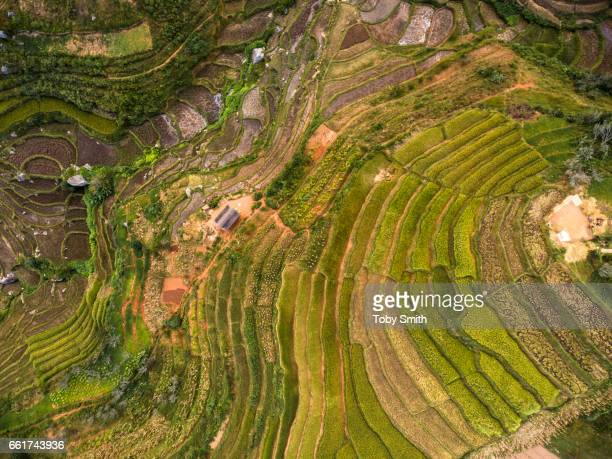 Complex rice terraces irrigated by streams are in various states of harvest The Betsileo communities are famous for their intricate landscaping...
