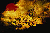 Composite of a lone tree, burning fire, and red Sun.