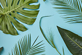 composition of different green leaves on a blue background can be used to decorate any texture flat lay