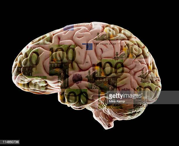 Composition of human brain model and one hundred euro notes