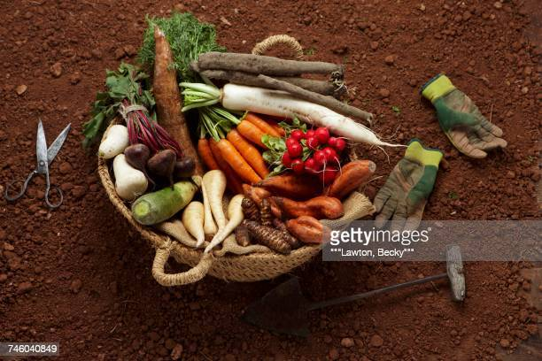 Composition with tubers :turnips,sweet potatoes,carrots,parsnips,salsifies and cassava