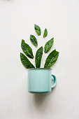 A concept or creative idea that signifies a useful drink or herbal or green tea. From the mug fly leaves.