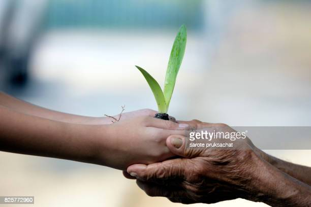 Conceptual close up environment photo ,Hands of elderly woman and baby holding a young plant against a green natural background in spring. Ecology concept .