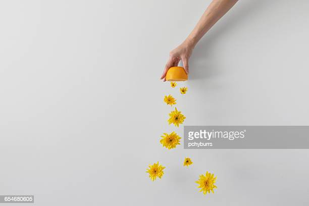 Conceptual hand squeezing an orange
