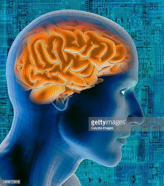 Conceptual image of human brain
