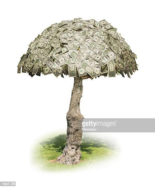 conceptual photo of money actually growing on trees