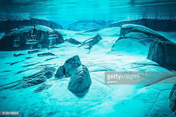 Conceptual unde the water image of a whale pod