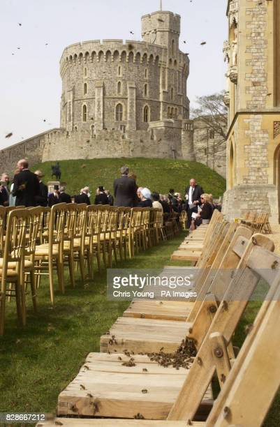 Concerned guests keep a safe distance as a swarm of bees encirle chairs on the lawn of Windsor Castle The Queen was amused today when a rival swarm...