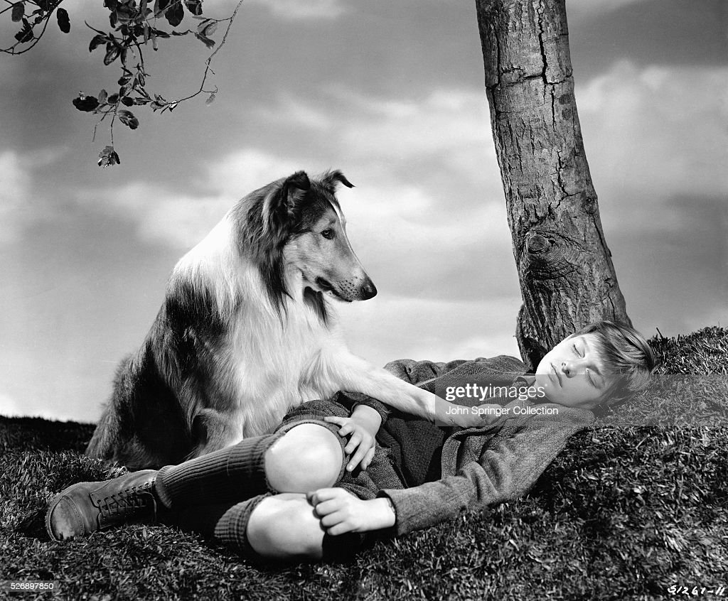 A concerned Lassie places a paw on a sleeping Joe Carraclough (Roddy McDowall) in a publicity still for Lassie Come Home.