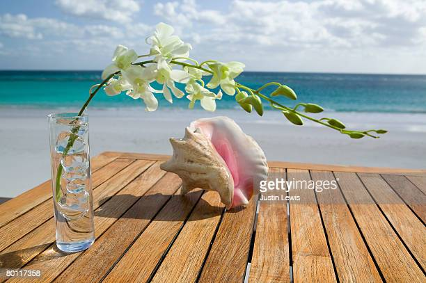 Conch shell and flower sitting on beach