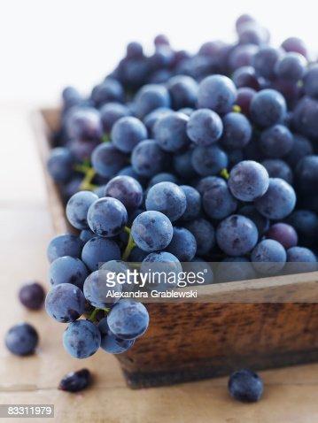 Concord Grapes : Stock Photo