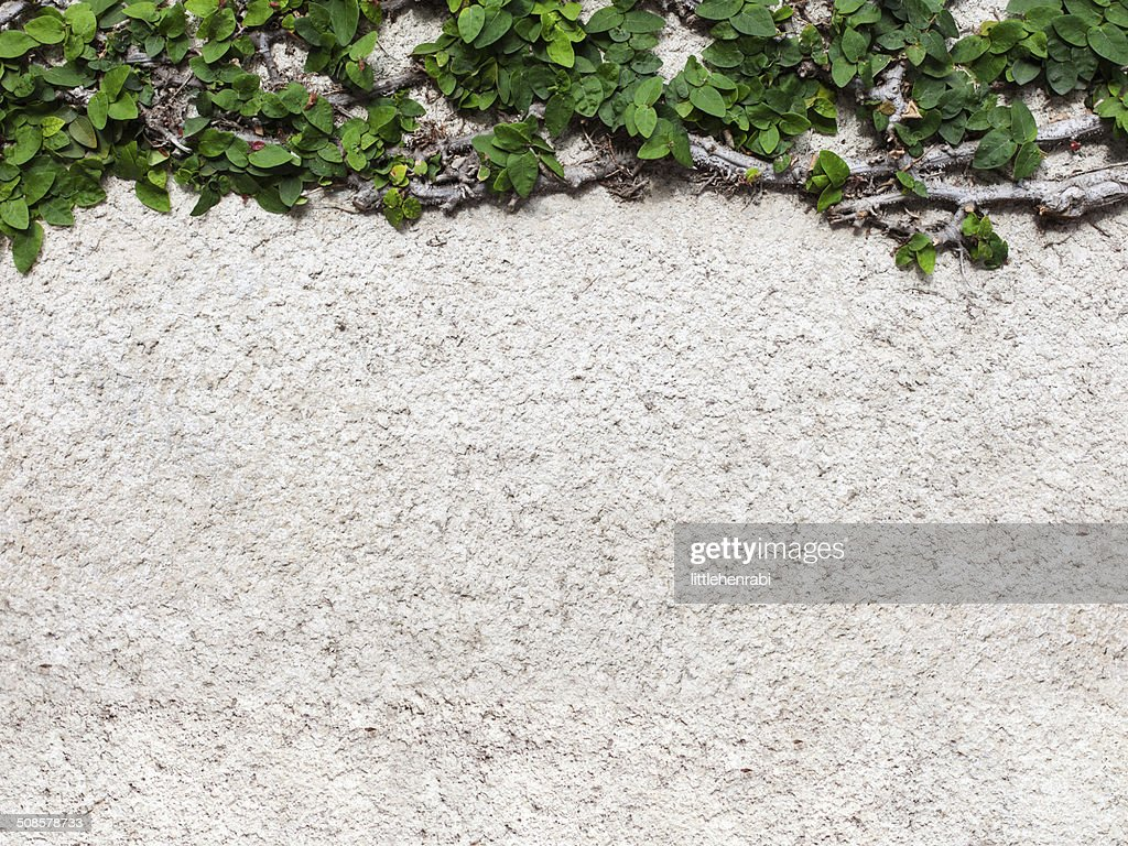 concrete blank background with green leaves : Stock Photo