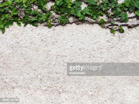 Béton fond blanc avec feuilles vertes : Photo