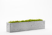 Concrete pot filled with moss a white background