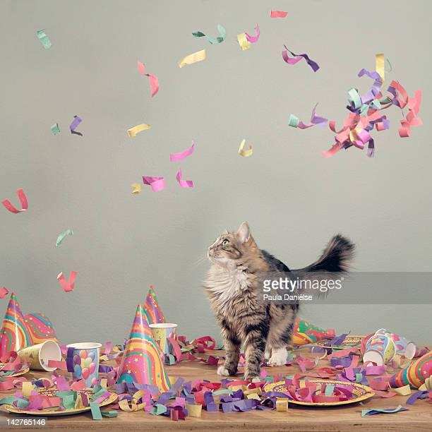Confetti cat