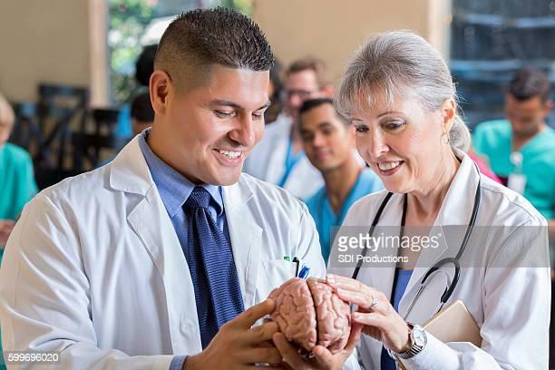 Confident doctors examine human brain model