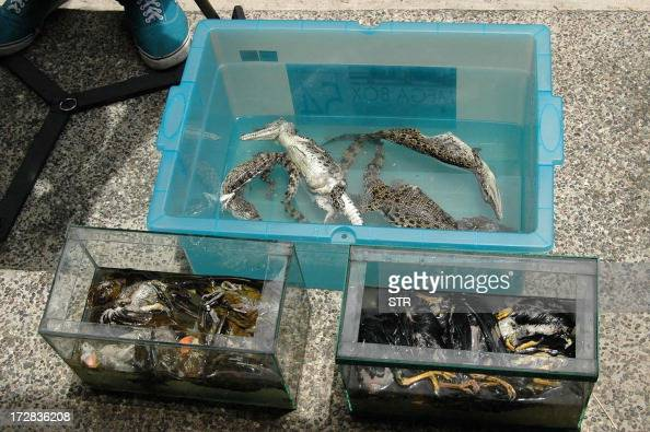 Confiscated dead crocodiles and Palawan hill mynah birds are seen in this photo in Manila on July 5 after a cache of other rare species was found in...