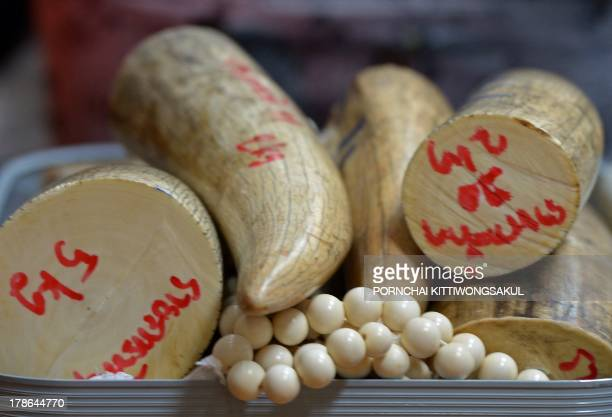 Confiscated elephant tusks are displayed during a press conference at the customs office in Bangkok on August 30 2013 Thai authorities seized more...