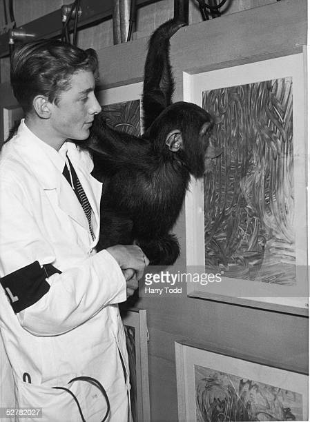 Congo the famously artistic London Zoo chimpanzee explains one of his paintings to his handler Tony Fitzgerald at an exhibition at the Institute of...