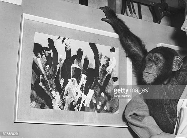 Congo the famously artistic London Zoo chimpanzee with one of his paintings at an exhibition at the Institute of Contemporary Arts which is being...
