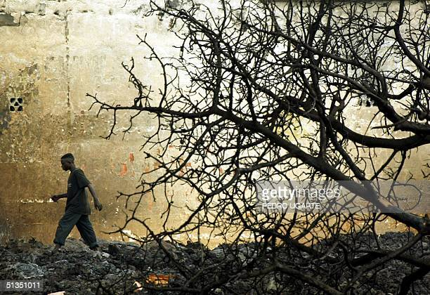 Congolese resident walks in front of a burnt tree in Goma 23 January 2001 Deadly earth tremors shaking centra Africa's Lake Kivu region in the...
