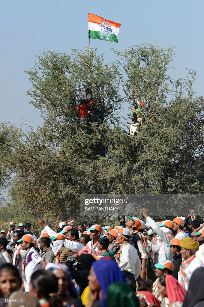 Congress party supporters hold the party flag as they occupy the top of a tree during a political rally addressed by Congress president Sonia Gandhi ahead of the Gujarat Assembly polls at Siddhpur, some 120 kms from Ahmedabad on December 10, 2012. Gujarat state of Western India goes to polls in two phases, December 13 and 17, 2012. AFP PHOTO / Sam PANTHAKY