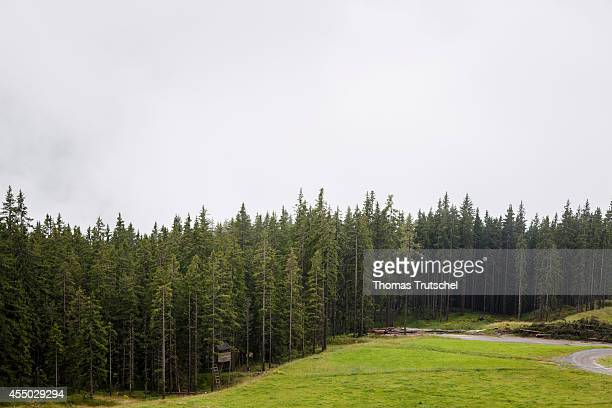 Conifer forest in the Austrian Central Alps on August 21 in Schmitten Austria