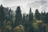 Coniferous Forest Landscape mountains on background Travel serene scenery moody weather autumn season