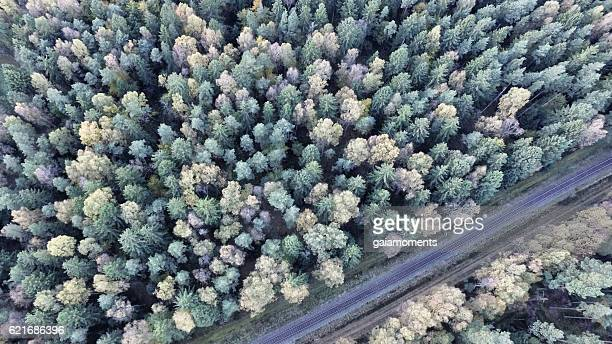 Conifers and railway track