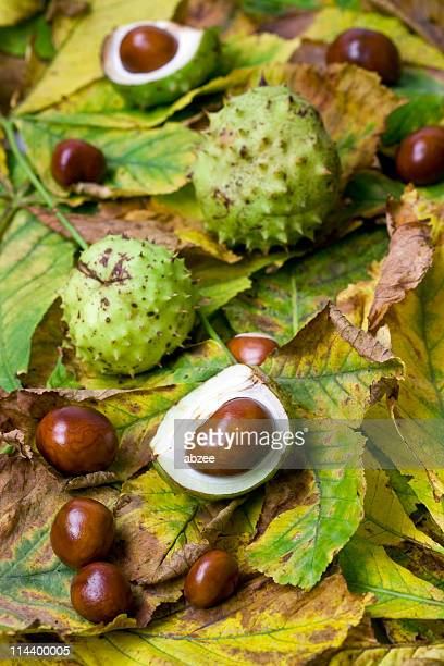 Conkers and Chestnut Leaves