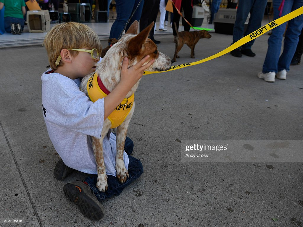 Conner Grubb, 4, cuddles rescue dog Lindsay, an Australian cattle dog inside the TAC Air hanger May 04, 2016. The Dog is My Copilot organization flew in over 90 rescue dogs and rescue cats from Texas and New Mexico to awaiting foster organizations at Centennial Airport May 04, 2016. Conner's grandmother, Sue Hendrick is with New Hope Cattle Dogs that serve the front range.