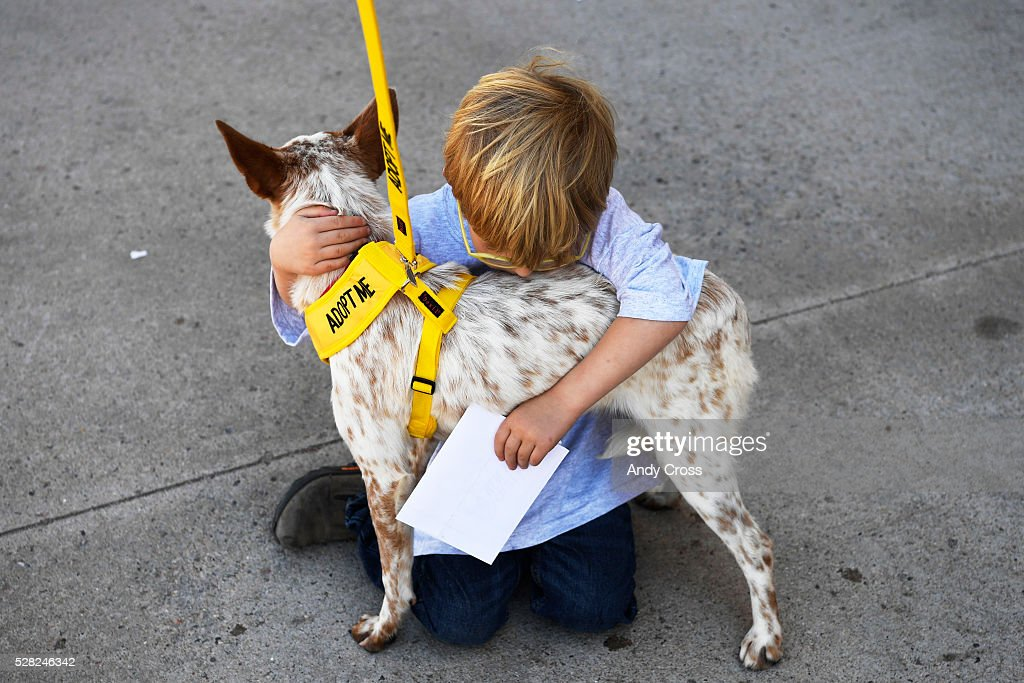 Conner Grubb, 4, hugs rescue dog Lindsay, an Australian cattle dog inside the TAC Air hanger May 04, 2016. The Dog is My Copilot organization flew in over 90 rescue dogs and rescue cats from Texas and New Mexico to awaiting foster organizations at Centennial Airport May 04, 2016. Conner's grandmother, Sue Hendrick is with New Hope Cattle Dogs that serve the front range.