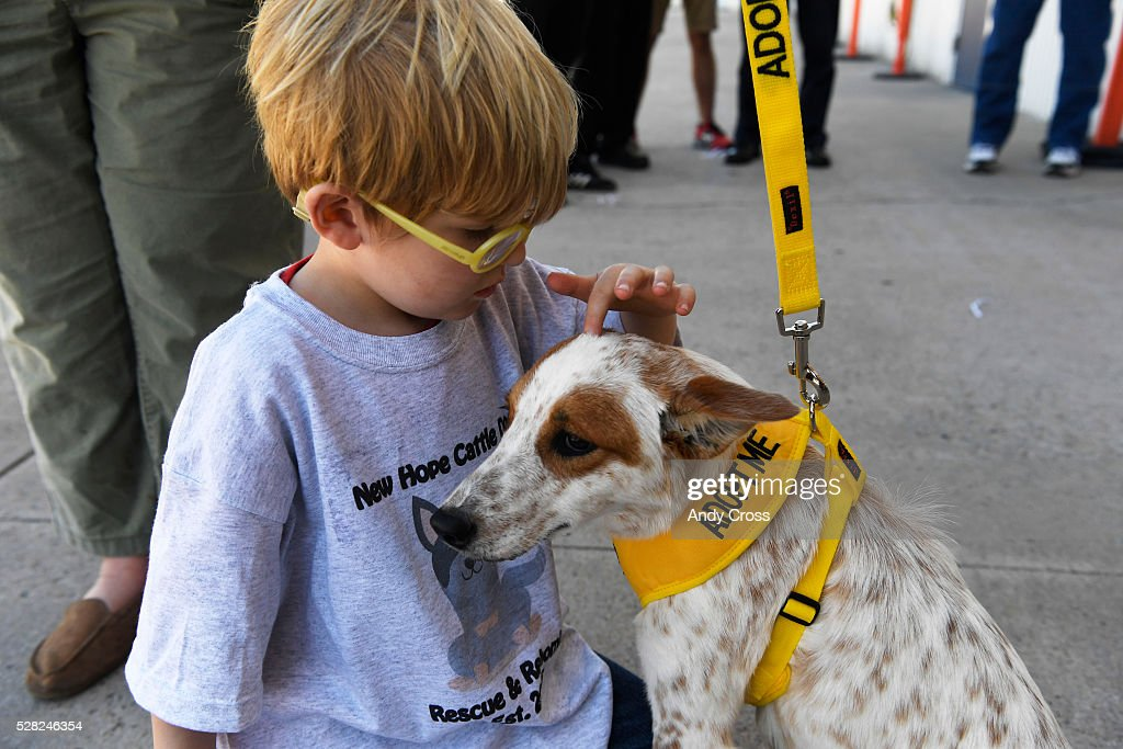 Conner Grubb, 4, inspects rescue dog Lindsay, an Australian cattle dog inside the TAC Air hanger May 04, 2016. The Dog is My Copilot organization flew in over 90 rescue dogs and rescue cats from Texas and New Mexico to awaiting foster organizations at Centennial Airport May 04, 2016. Conner's grandmother, Sue Hendrick is with New Hope Cattle Dogs that serve the front range.
