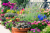 container flower garden.  rrClick here to view my other flower and plant images:
