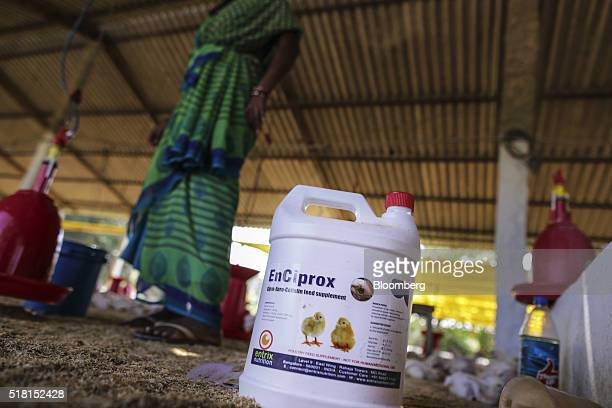 A container of EnCiprox which lists ciprofloxacin enrofloxacin and colistin as ingredients sits on the ground of a poultry farm in Ranga Reddy...