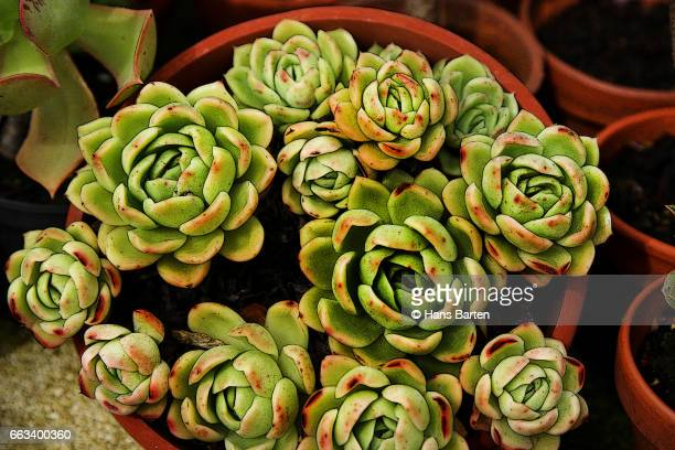 container of succulent plants