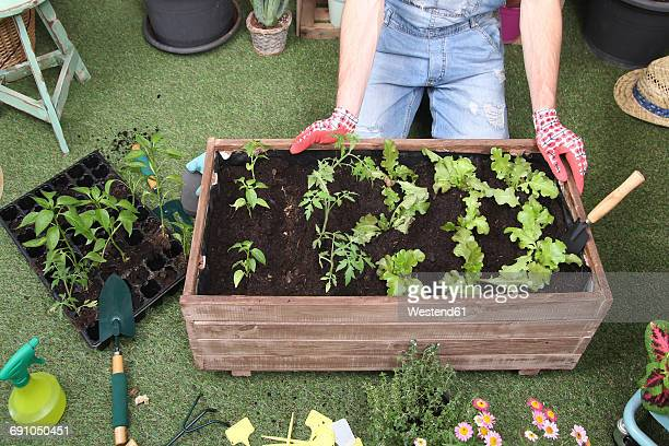 Container with tomatoe plants, pepper plants and lettuce in the urban garden