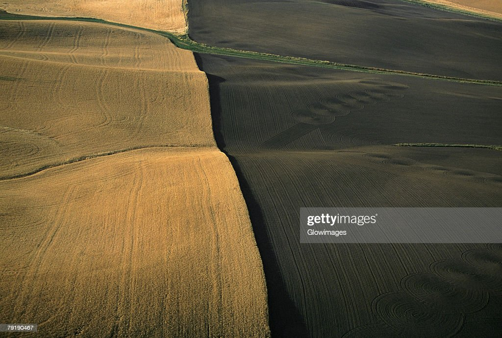Contour plowed fields of golden wheat, Washington state : Stock Photo