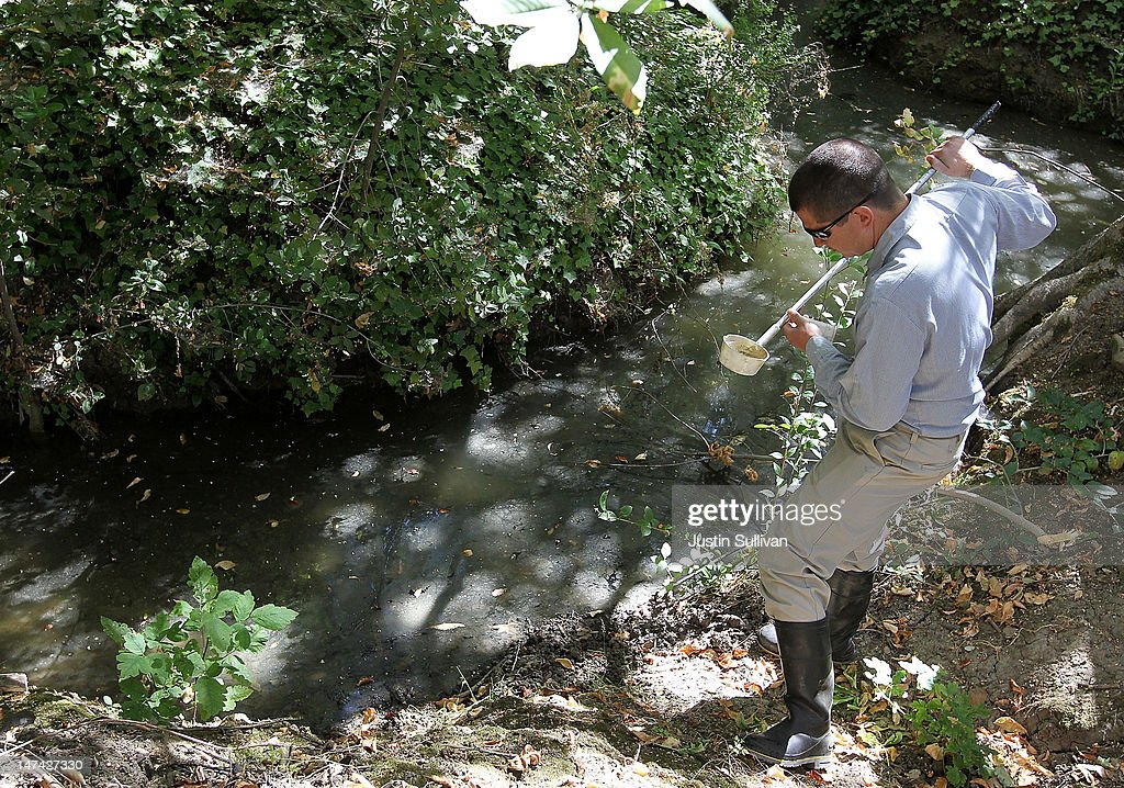 Contra Costa County Mosquito and Vector Control District technician David Wexler looks for mosquito larvae in a water sample from a creek on June 29, 2012 in Pleasant Hill, California. As reports of mosquitoes with West Nile virus are increasing across the country and several people have been confirmed to be infected by the potentially dangerous disease, the Contra Costa County Mosquito and Vector Control District is testing mosquito larvae found in standing water throughout the county and is using mosquito fish and BVA Larvacide oils to eradicate the pest.